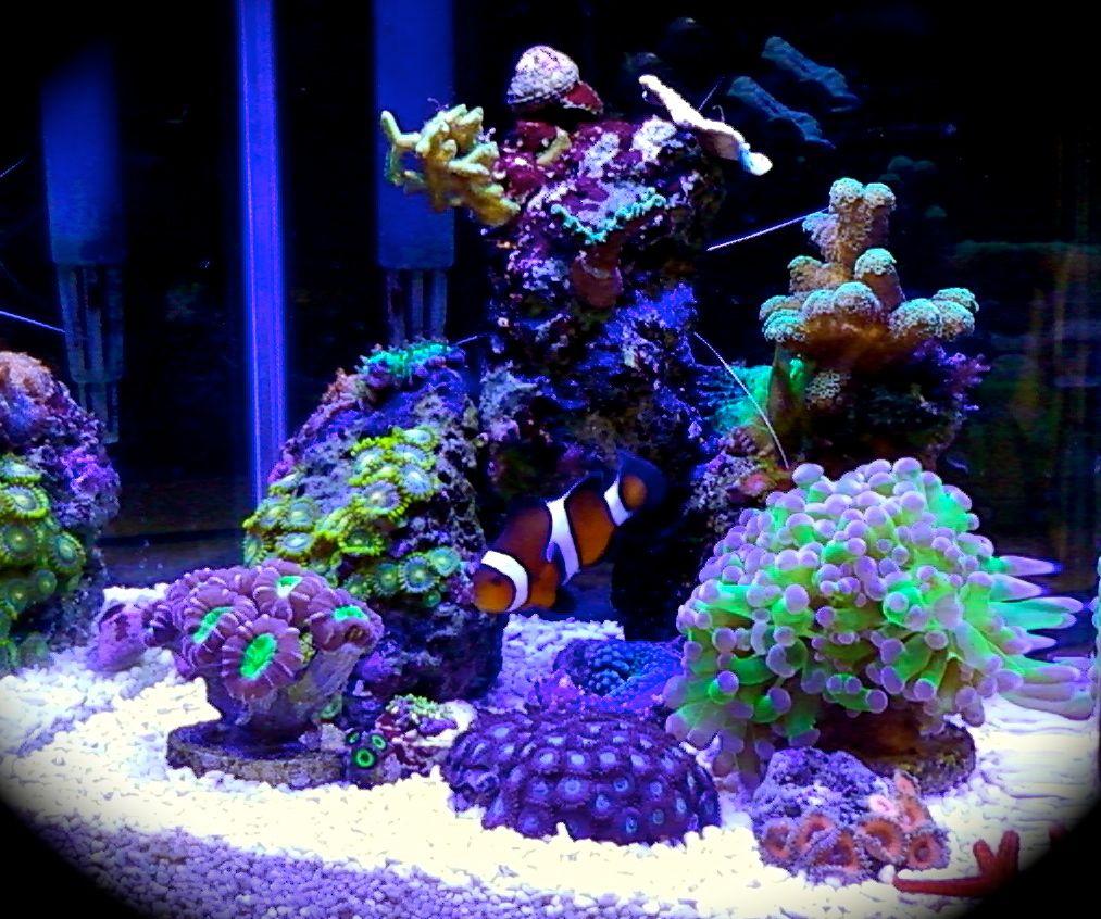 Nice Nano Tank Nano Reef Tank Reef Tank Saltwater Fish Tanks