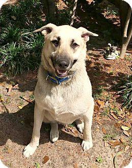 Pin by Jo Wiest on Rescue Dogs | Shepherd dog, German
