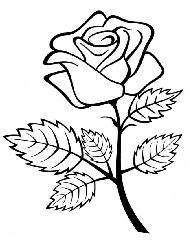 Disegno Di Rose A Primavera Da Colorare 660x847 Schizzi Di Fiori