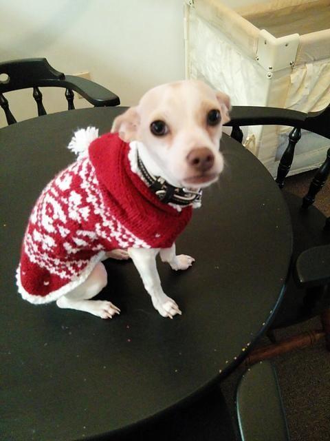 6) Name: 'Knitting : Zoey's Fair Isle Hooded Dog Sweater | Doggie ...