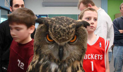 #kendrawilkinson #owl #angry #funny