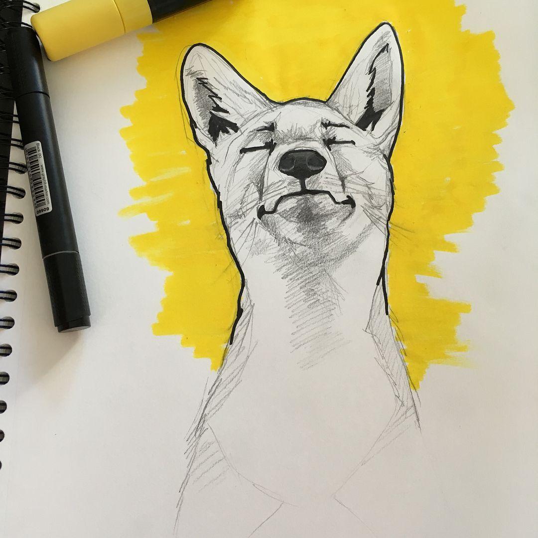 Etit Croquis Du Samedi Ou La Zenitude Du Renard Fox Foxes