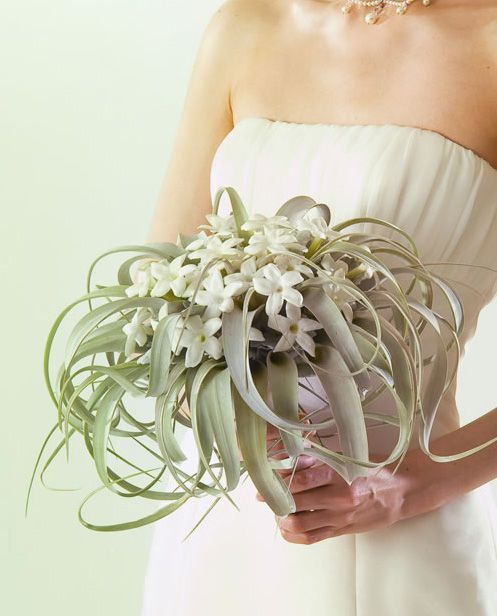 Stephanotis and an air plant, really wicked cool and different