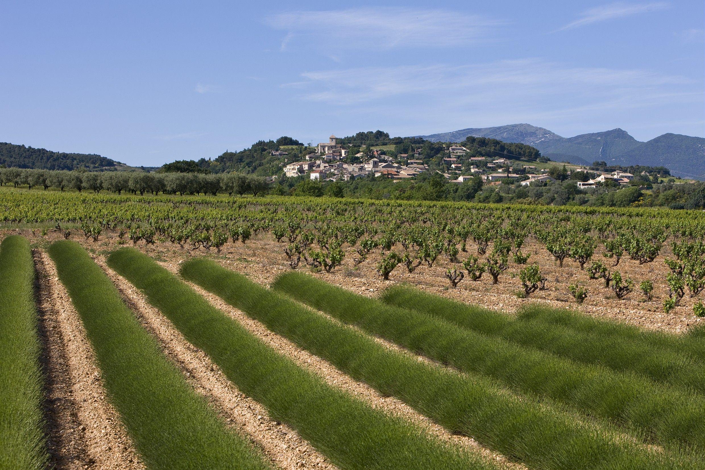 AOC Vinsobres Drôme Provençale Rhone, Vallée du rhone