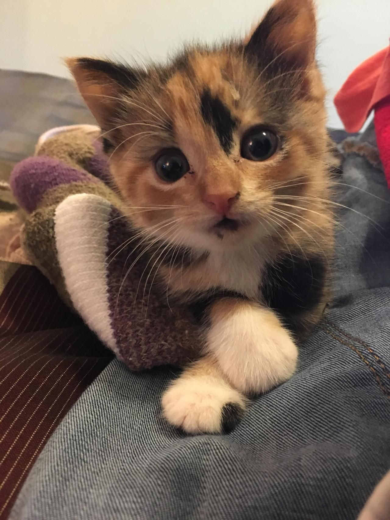 Found This Baby In A Gutter At 3 Weeks Old Still Cant Decide What To Name Her What Do You Guys Think By Iatethecheesest Cute Cats Cats Cute Cats And Kittens