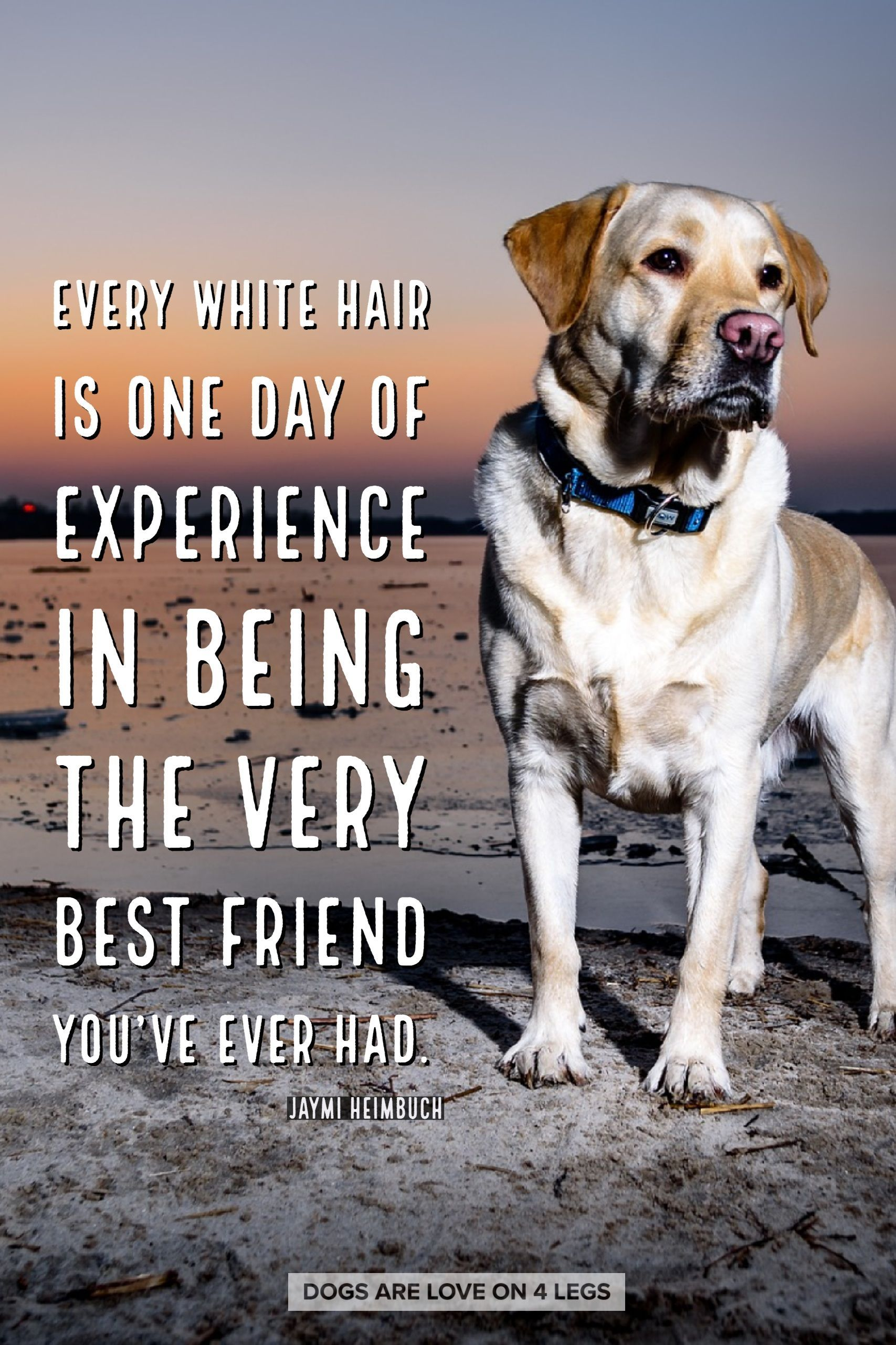 Dog Quote Every White Hair Is One Day Of Experience Dog Dog