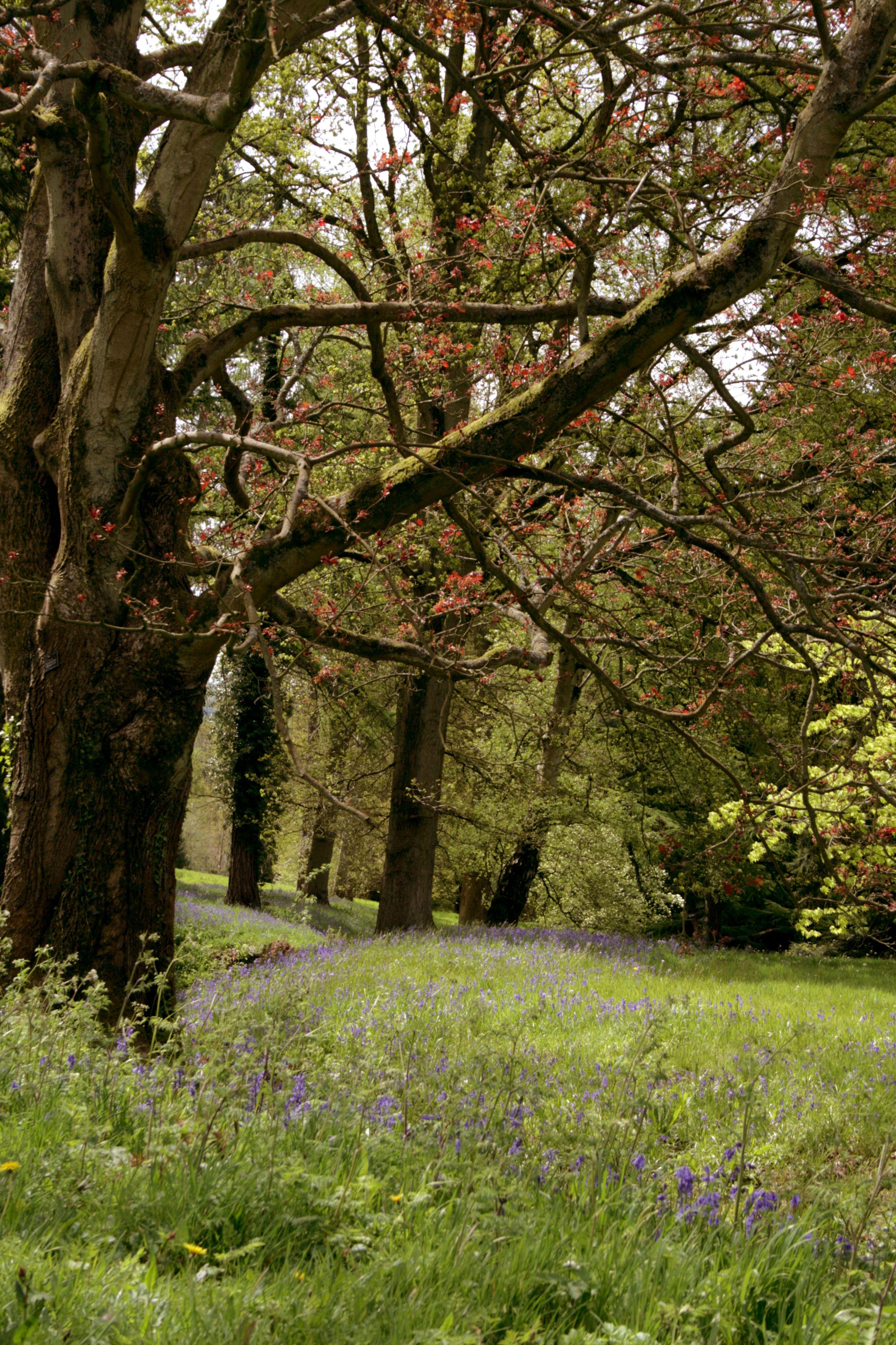 Claremont landscape gardens ladies in an english garden claremont landscape gardens workwithnaturefo