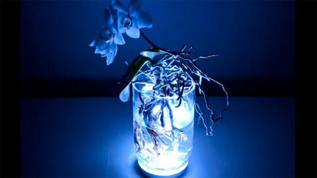 식물로 만들어진 램프를 살아있는 인터페이스로 조종한다 | 크리에이터 프로젝트