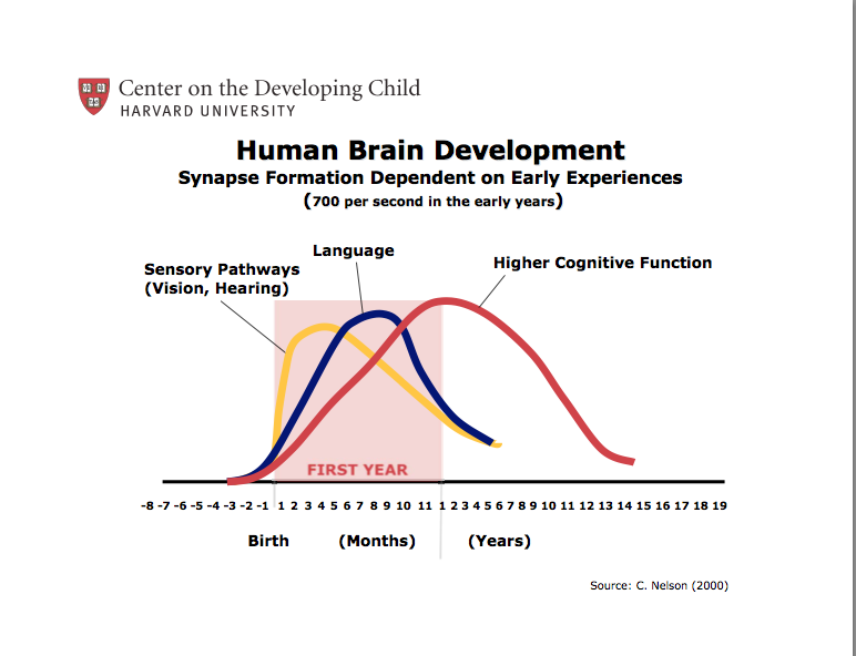 Your Child S Brain Development Is Happening Largely In The First Year Make It Count Brain Development Development Neural Connections