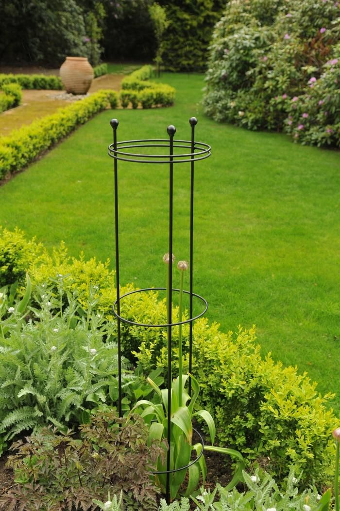 Plant Border Supports Tall Circular Wire Support Burncoose Nurseries Plants By Mail Order Direct To You