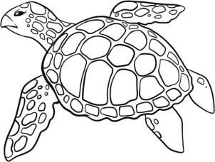 How To Draw A Sea Turtle Step 5 Turtle Drawing Sea Turtle Drawing Turtle Art