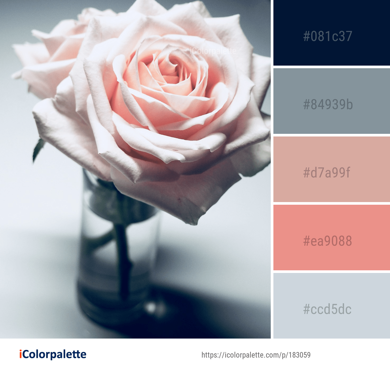 Color Palette Ideas From 5017 Flower Images Icolorpalette Rose Flower Colors Hex Color Palette Flower Background Wallpaper
