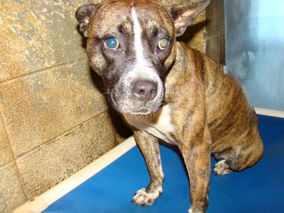 Lady saved! Rescue dogs, Shy girls, Animals
