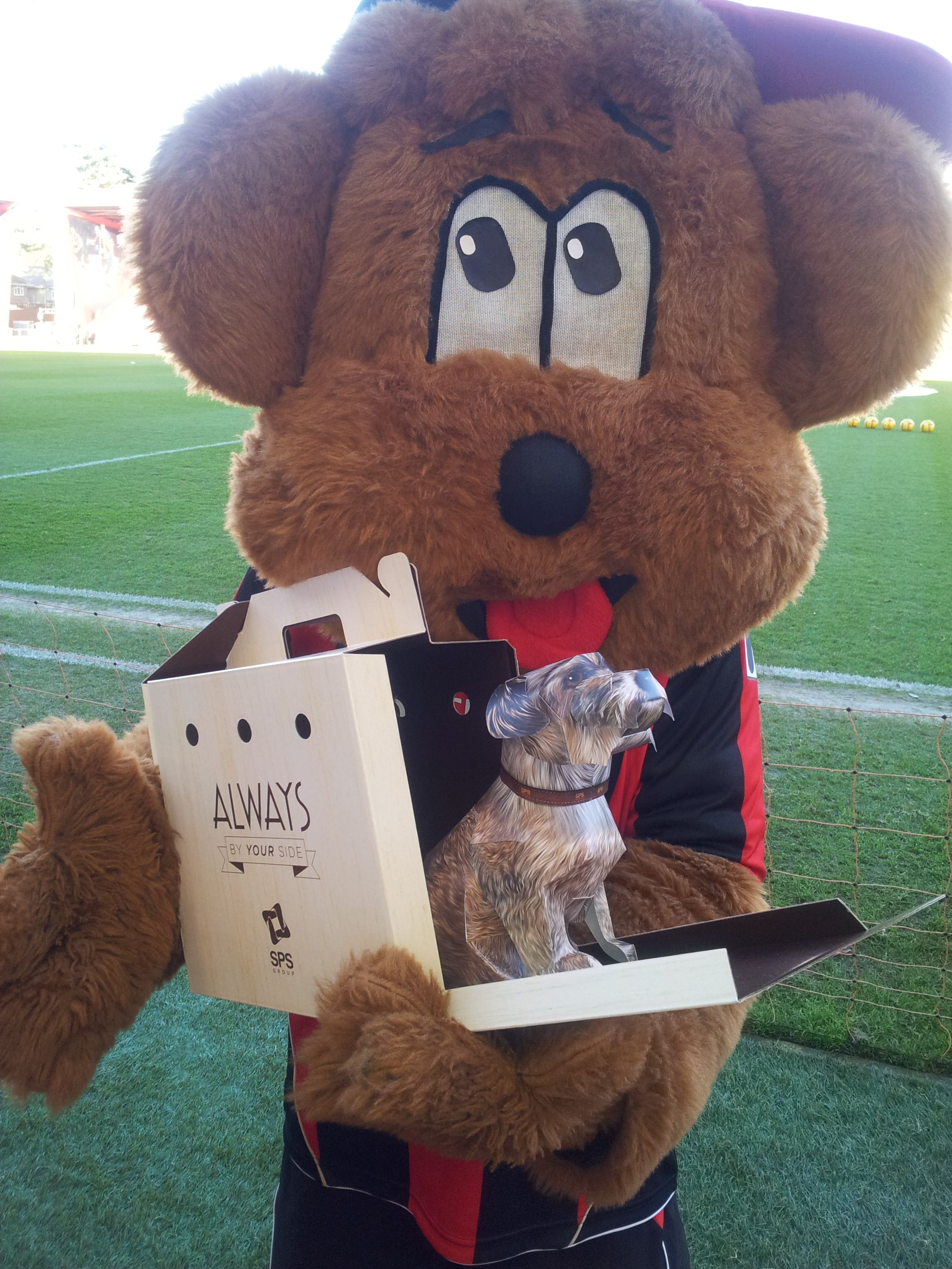 Buffy Was A Good Luck Charm To Afc Bournemouth On Boxing Day