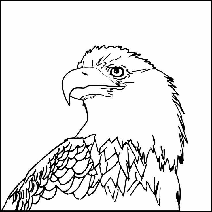 Pin By Susan Carrell On Eagle Sketches Coloring Pages Landmarks