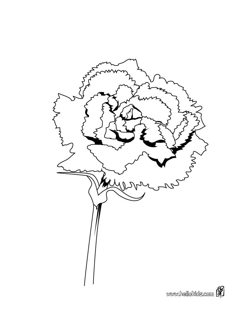 Beautiful Carnation Coloring Page Perfect Coloring Sheet For Kids