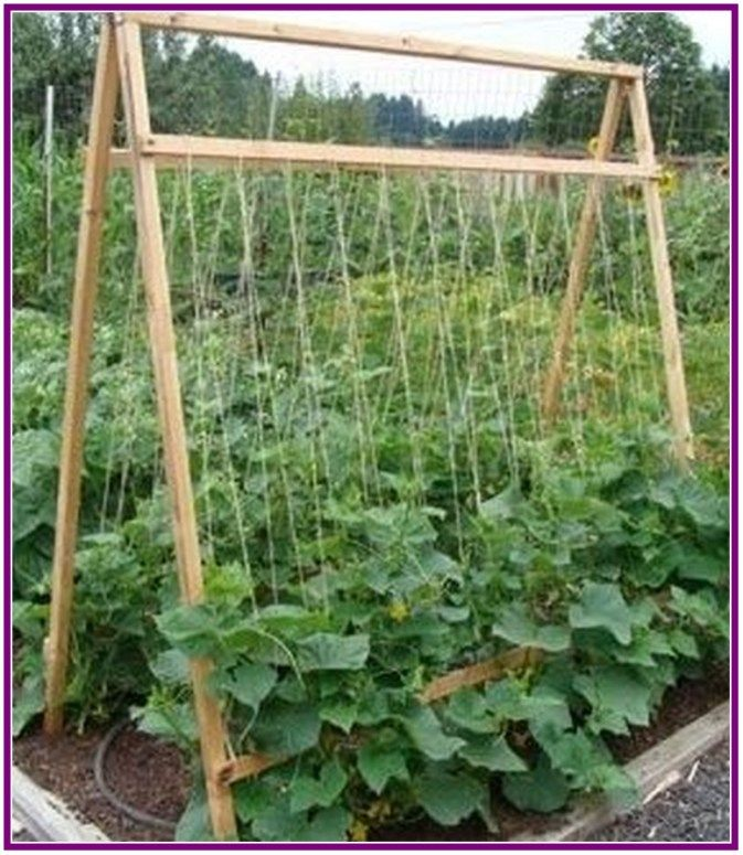 5 Vertical Vegetable Garden Ideas For Beginners: 27+ Raised Bed Designs For Gardening: Tips, Advice, And