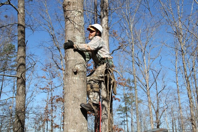 Pin by Robert Young on Tree Trimming Services Tree