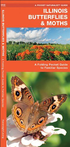 Illinois Butterflies & Moths: A Folding Pocket Guide to F...