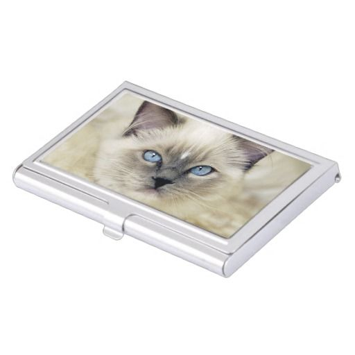 Ragdoll kitten business card holder cat office stuff pinterest ragdoll kitten business card holder colourmoves