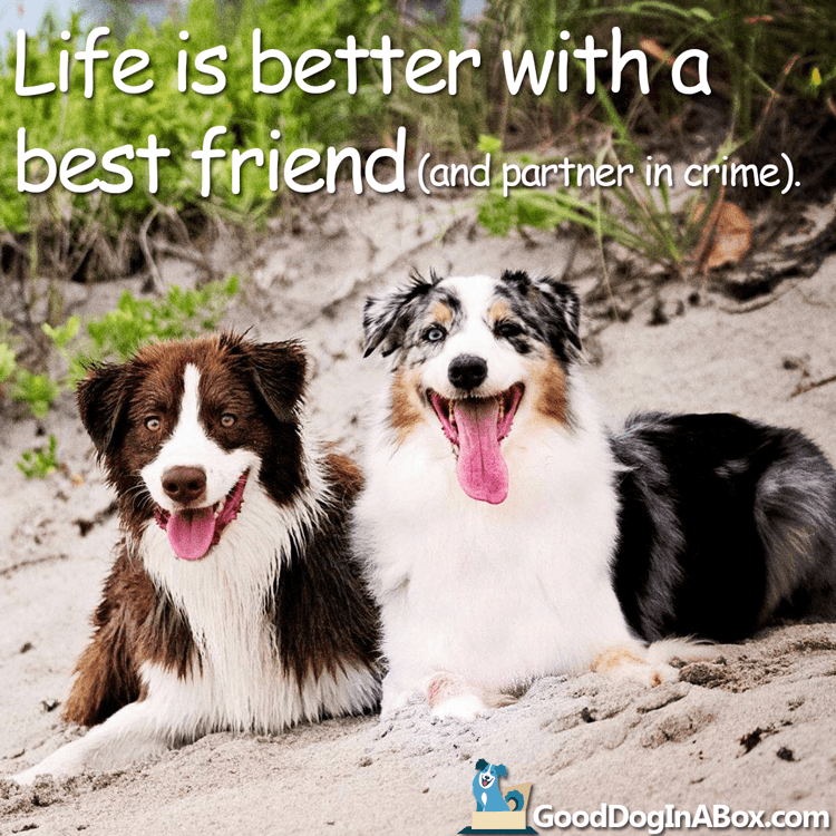 Dog Pictures Best Friends Dog Quotes Animal Love Quotes Dog Best Friend