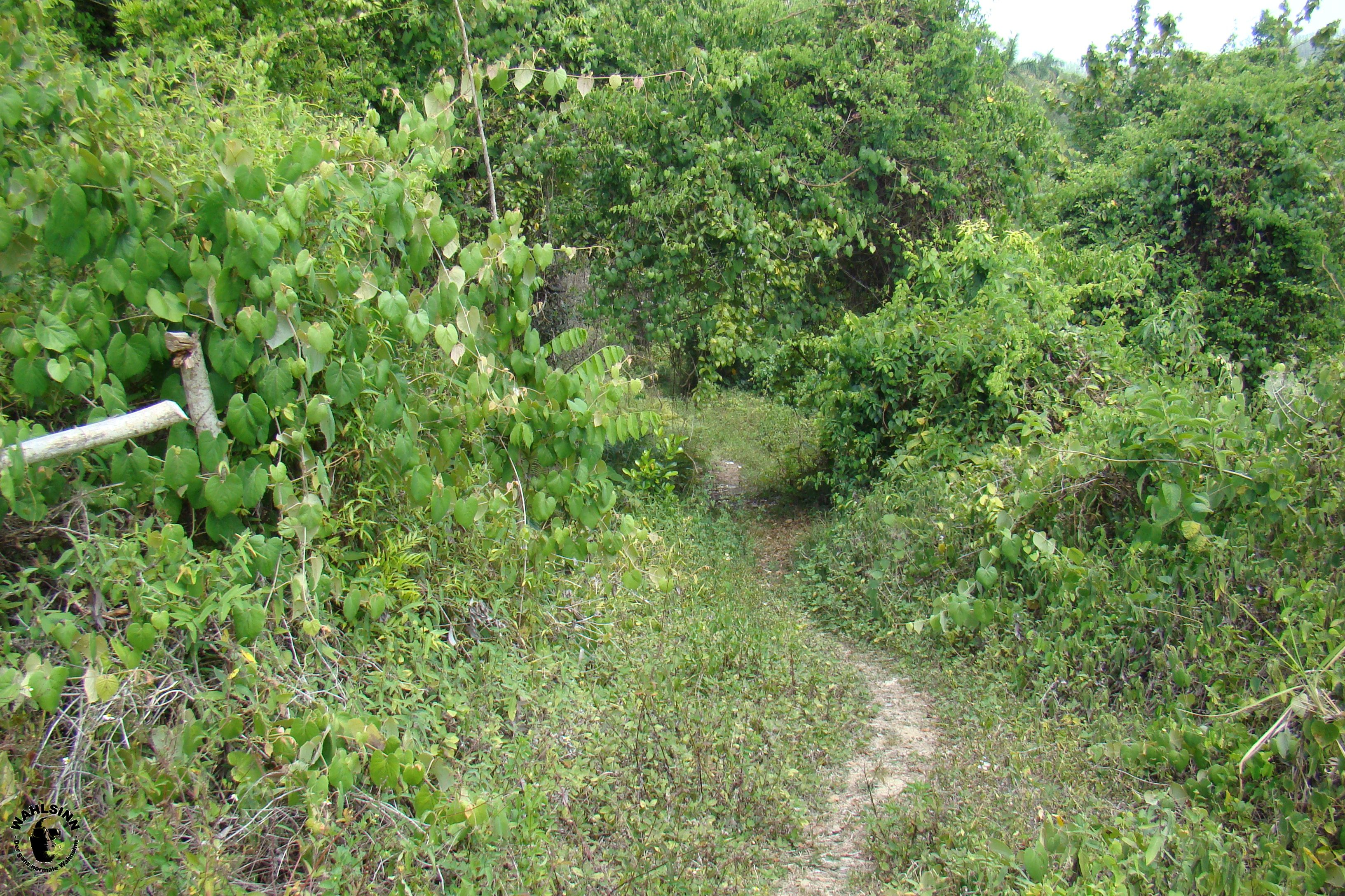 Dschungel Weg // Las Terrazas (Kuba)