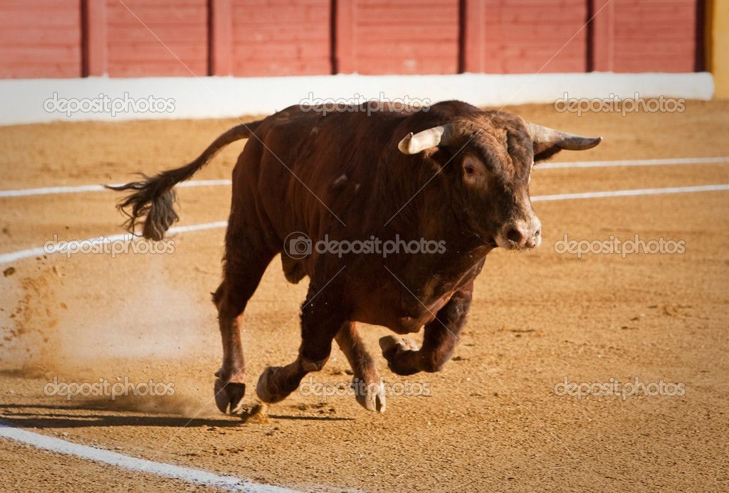 depositphotos 34495459-Capture-of-the-figure-of-a-brave-bull-in-a ... adef64d397c