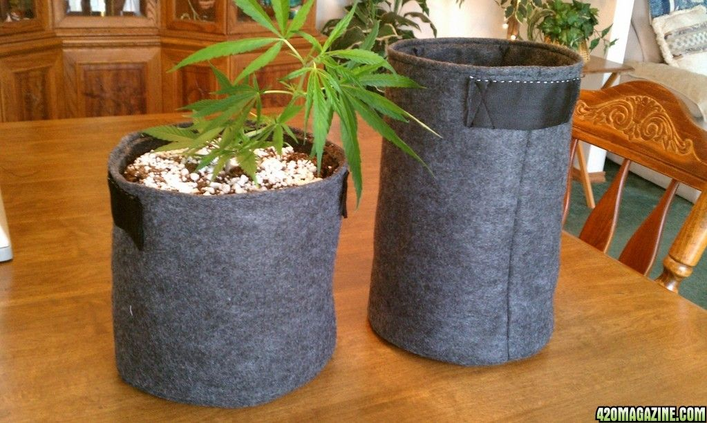 Diy Fabric Grow Pots Quot Cannabags Quot Made From Eco Felt Best Fish For Aquaponics Diy Fabric Diy Grow Bags