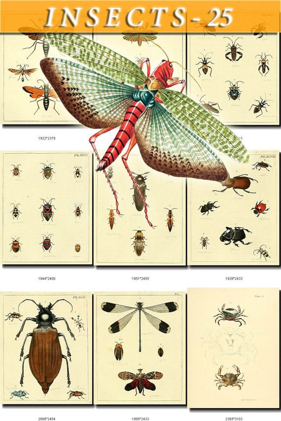 INSECTS-25 Collection of 98 vintage by ArtVintage1800s on Etsy