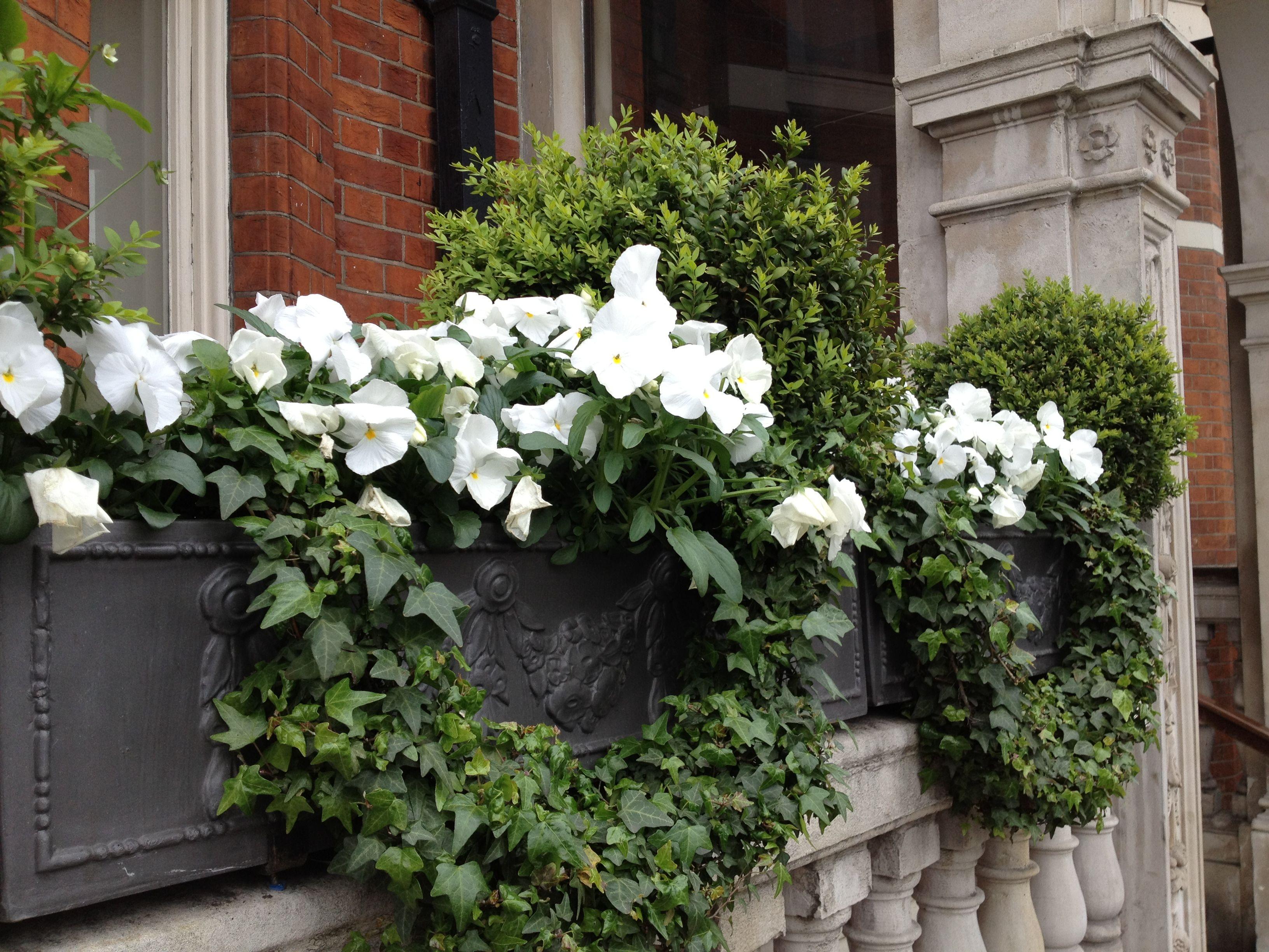 Window box london jardin pinterest jardini res for Jardiniere hiver balcon