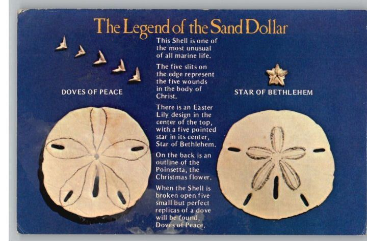 photograph about Legend of the Sand Dollar Poem Printable named Postcard~The Legend of the Sand Greenback Poem..  Xmas