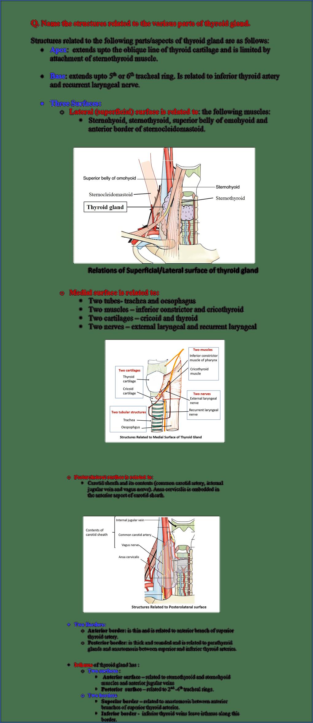 Development Of Tongue And Thyroid Gland Thyroid Gland Thyroid