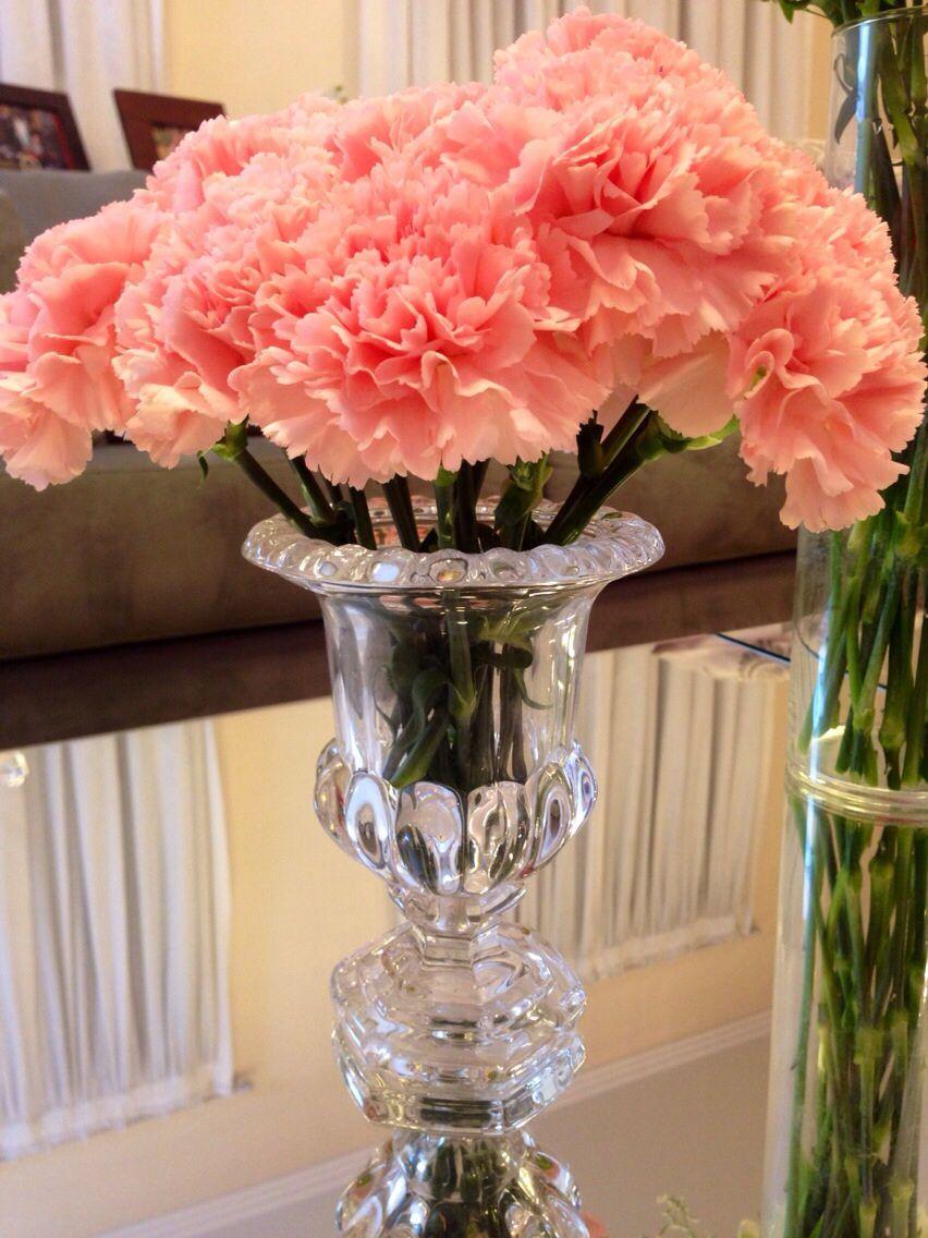 Cravos rosas. Delicadeza flores 11 943976674