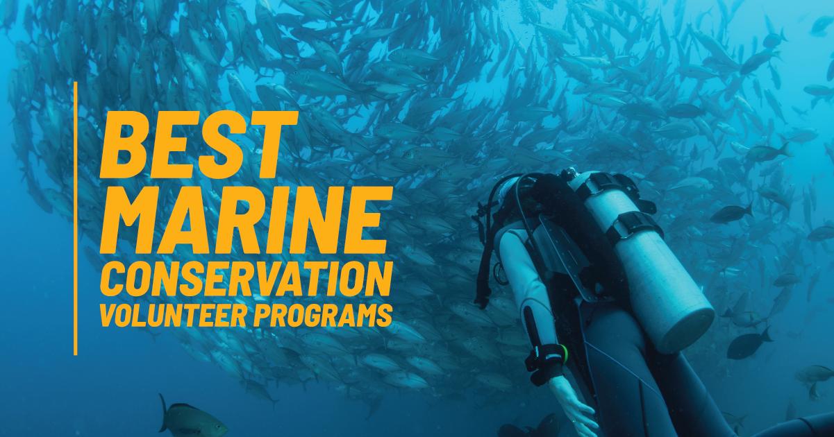 Best Marine Conservation Volunteer Programs 2019 2020 Marine Conservation Volunteer Programs Conservation