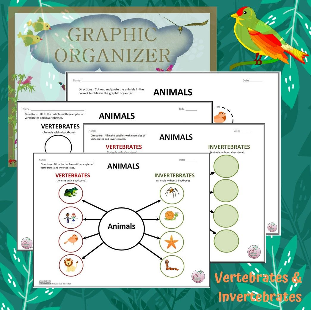 Vertebrates And Invertebrates Science Graphic Organizer