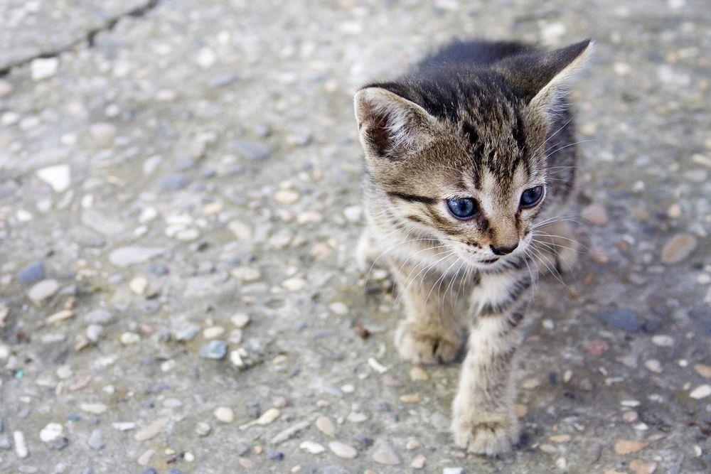 Baby Katzen Kostenlos