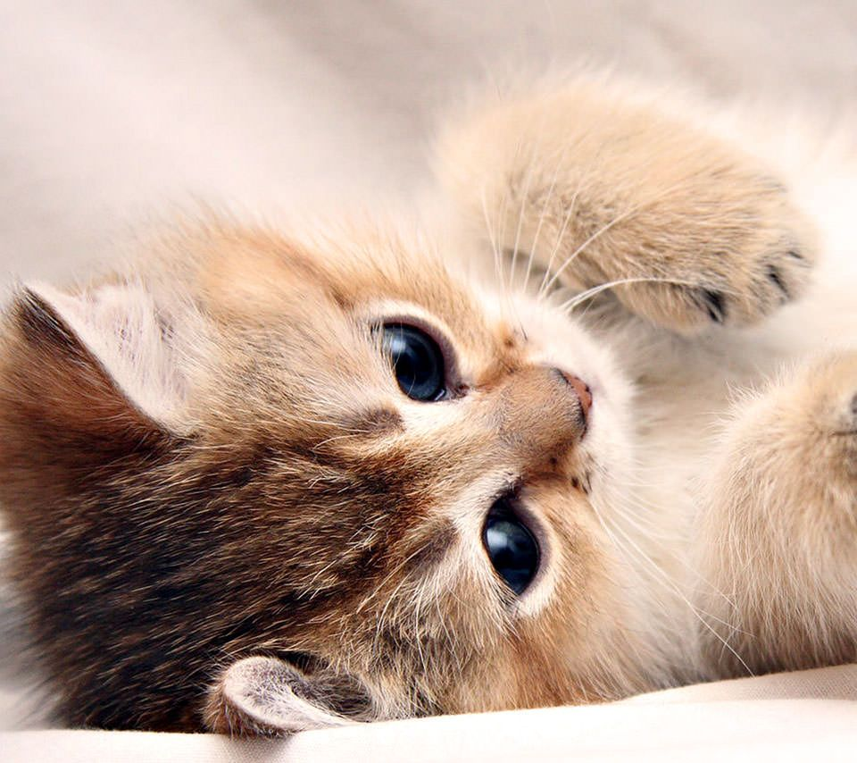 2019年の最高 スマホ 壁紙 無料 猫 猫 猫の壁紙 かわいい子猫