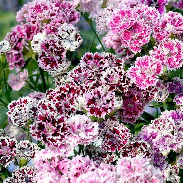 Fleurs dhiver – des couleurs chaudes dans la neige   archzine.fr