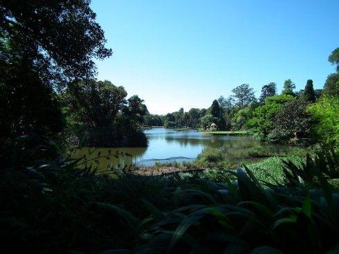 Melbourne botanical gardens. Beautiful!