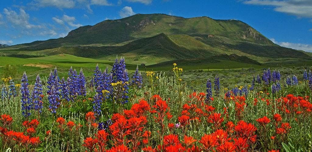 Sleeping Giant Wild Flowers In The Summer Steamboat Springs Co