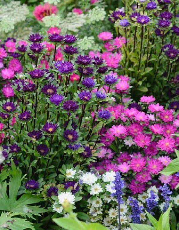 Recopilación de los jardines más coloridos y hermosos Plantas con