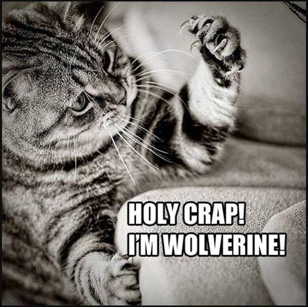 20 Very Funny Animal Memes Doozy List Funny Animal Memes Funny Cat Memes Funny Animals