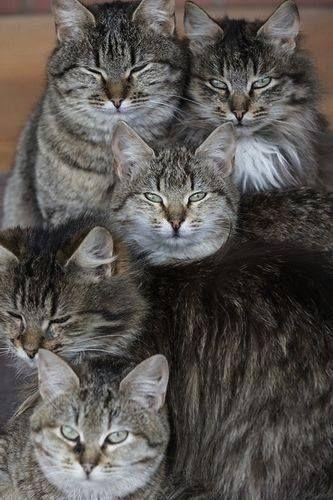 Cartes Postales CHATS 12 | Beaux chats, Photo chat et Jolis chats