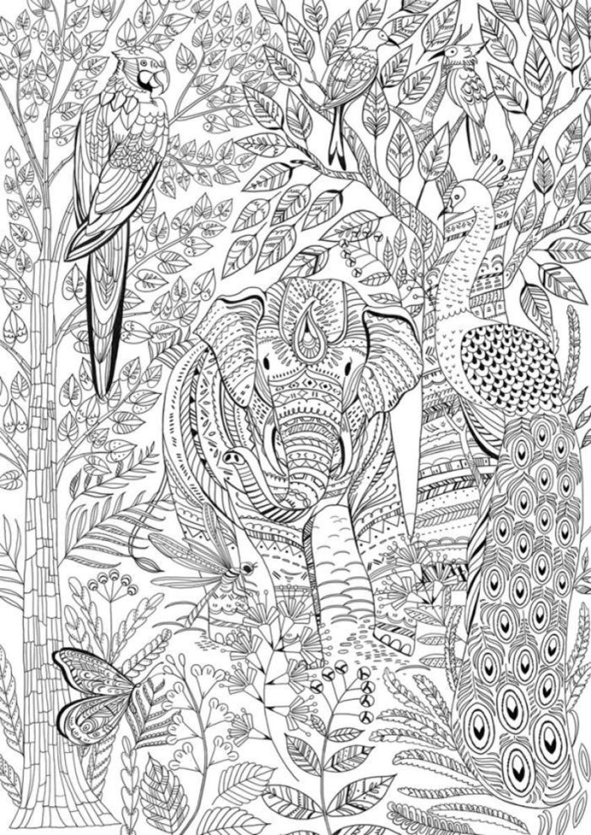 Animal Kingdom Cover Elephant Coloring Page Coloring Pages