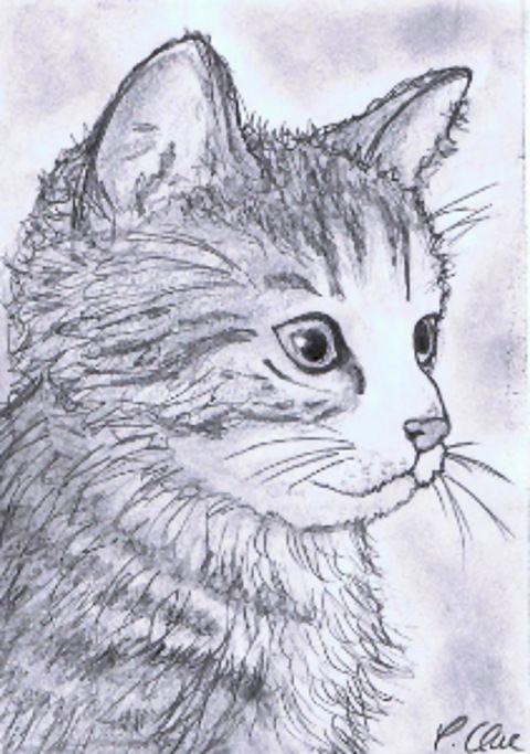 Zeichnung Bleistift Katzchen Zeichnungen Tiere Zeichnen Zeichnen