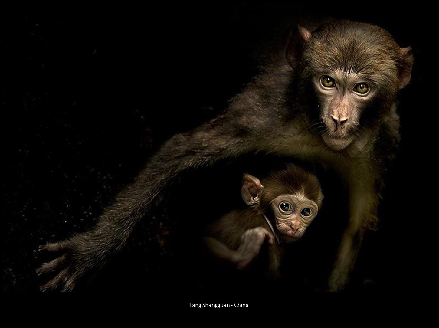 Małpka z matką