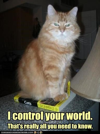 I Control Your World Crazy Cats Funny Cat Memes Funny Cats