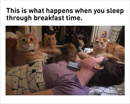 Funny Uber Memes : 10 fresh cat memes today!#1 space kitten ladies leggings. funny