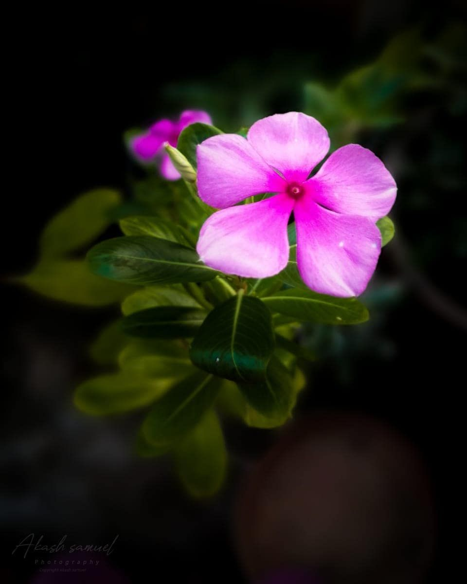 If you are alone Dont worry It is the place where great man are come from  Pic akashsamuel  floraflowersfloweryflowerdailyflowerssuperpicsmo...
