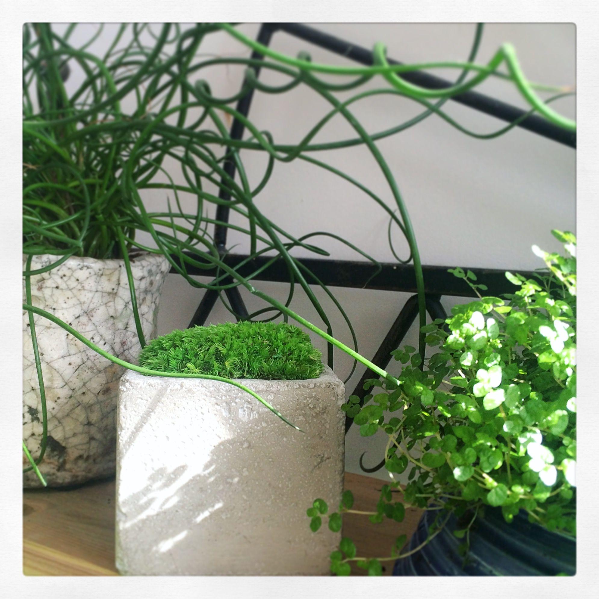 Design V G Tal, Plantes Stabilis Escr Ation Et R